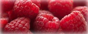 Growing Raspberries, garden.usu.edu, Utah State University Extension