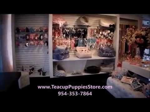 Teacup Puppies Store Teacup Yorkies For Sale, Teacup yorkie dogs Florida