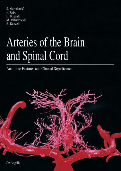 Arteries of the Brain and Spinal Cord. Anatomic Features and Clinical Significance