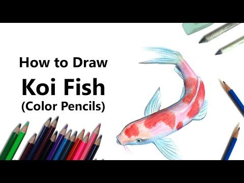 How to Draw a Koi Fish Video : DrawingTutorials101.com