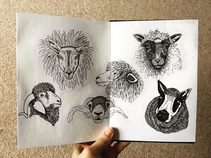 Filling up my sketchbook with sheep