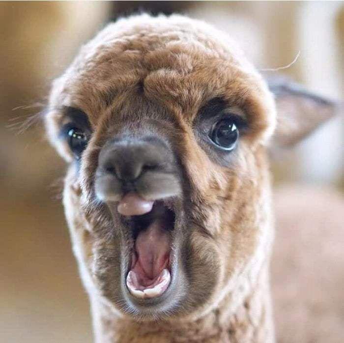 Крики животных с картинками