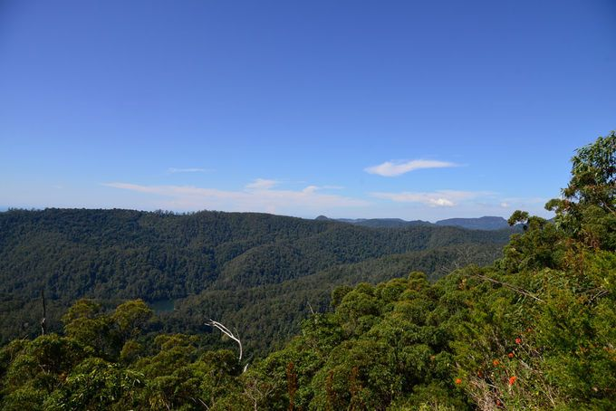Wunburra Lookout Springbrook