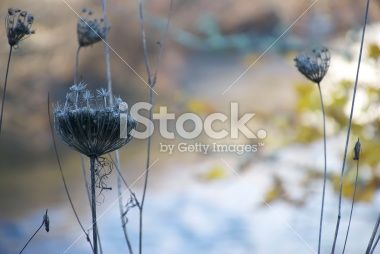 Nature's Beauty in Winter Royalty Free Stock Photo