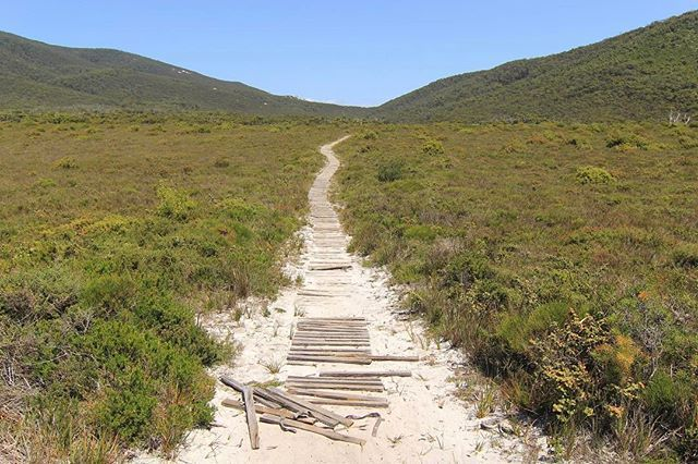 ::: INLAND :::⠀ ⠀ Crossing Wilsons Prom from east to west - Waterloo Bay, to Oberon Bay. The trail is ever changing.⠀ ⠀ #WilsonsProm #TheProm #VisitWilsonsProm #WaterlooBay #OberonBay #Mountains #Sand #Trail #Boardwalk #Greenery #Hiking #HikersGuide #Trekking #Tramping #BushWalking #Camping #OvernightHike #Adventure #Explore #TourismVictoria #VisitVictoria #SeeAustralia⠀hikersguide.com.au