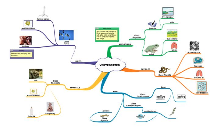 examples of vertebrates | Life Science Mind Map: Classification of Vertebrates