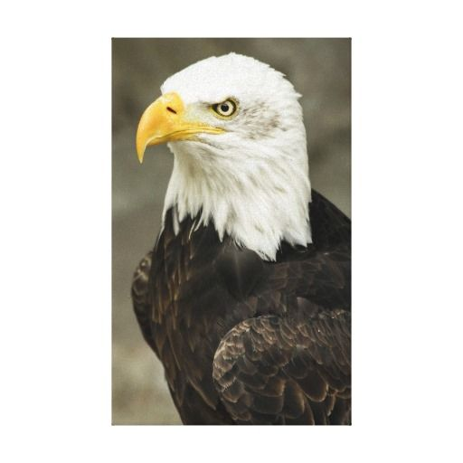 Bald Eagle Photo Canvas Print