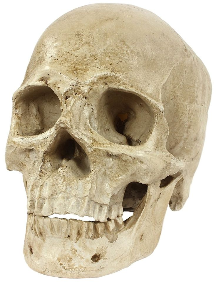 17 WTF Amazon Items You Didn't Know You Wanted For Christmas   Human skull, Skull, Life size
