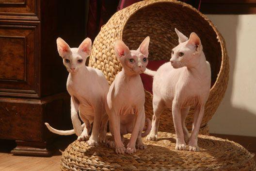 Jaki żwirek dla kota?