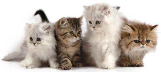 Image from https://xrayskd2000.files.wordpress.com/2008/11/kittens_cats_lovely.jpg.