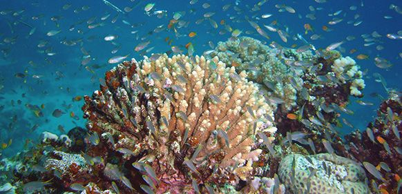 DIVING IN EAST TIMOR: THE HEART OF THE CORAL TRIANGLE