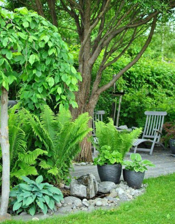 encuentra este pin y muchos ms en jardines bonitos de purilago