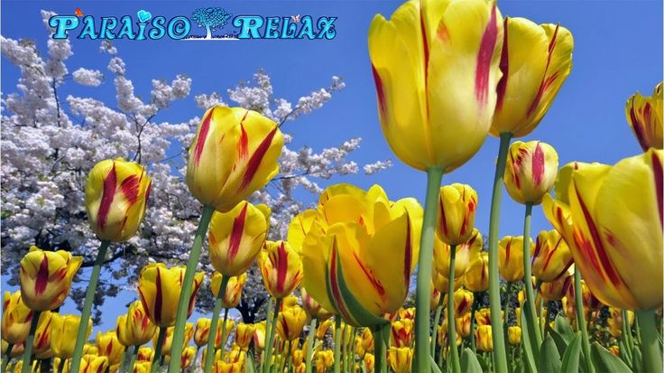 FLORES RELAJANTES, LA MEJOR MUSICA RELAX, THE BEST RELAX MUSIC, RELAXING, RALAXATION - YouTube