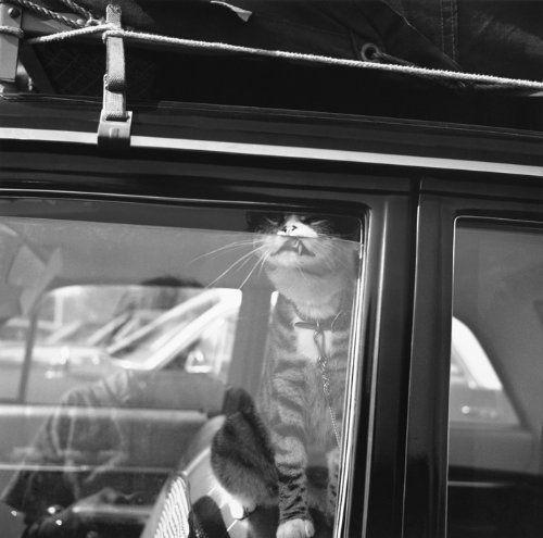 Vivian maier self portraits john maloof vivian maier elizabeth avedon classic photographyfilm