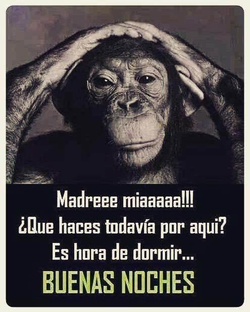 📢 Hora de dormir 📢🌃  goodnight  buenasnoches  feliznoche  mono  monkey …