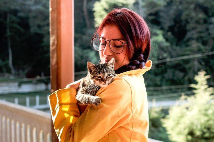 Grunnleggende førstehjelp for katt er lett å lære seg. Huskeregelen er...