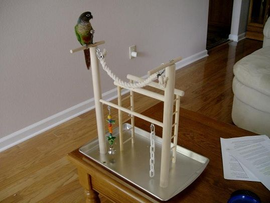 PlayGym_No2_20P.jpg - another really clever homemade bird playgym idea. Easy clean-up, too. Hmmm...