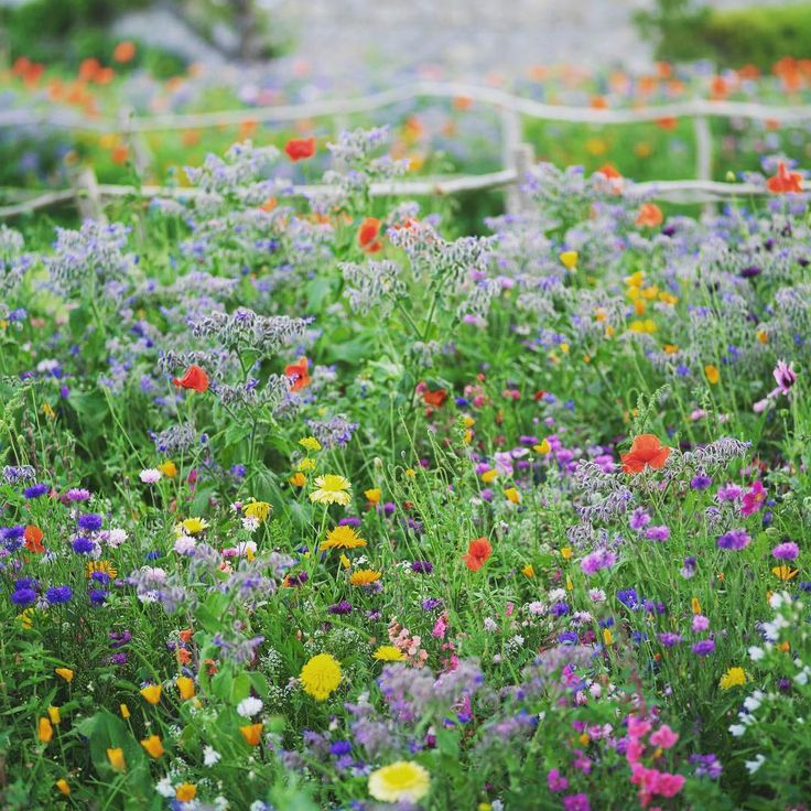 Today, I'm planning on sowing my own little patch of pictorial annual meadow, like this one in Airfield gardens last summer (photographed by my husband, garden photographer Richard Johnston). Hoping it will give us lots of dainty annual flowers for cutting, like cornflowers, marigolds, borage and other beauties :)