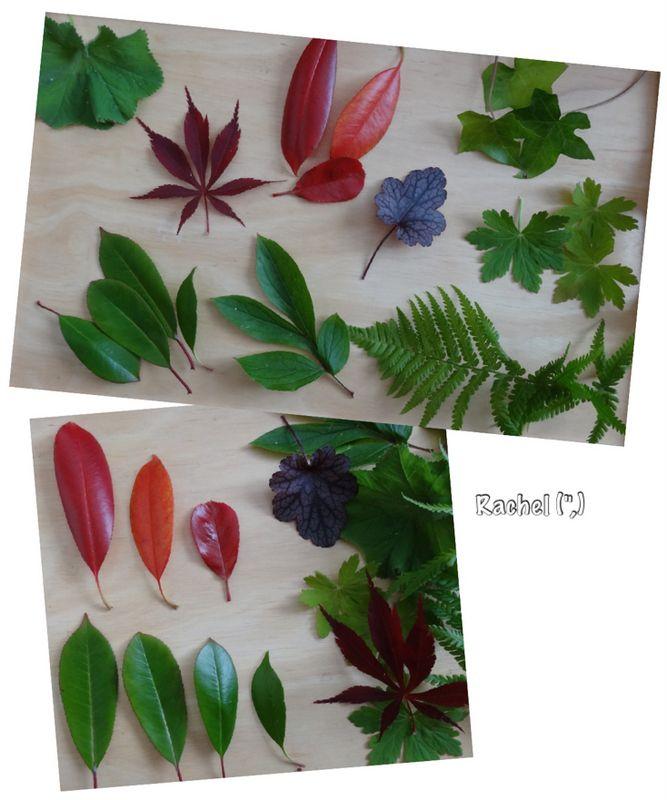 "Garden Maths... sorting leaves - from Rachel ("",)"