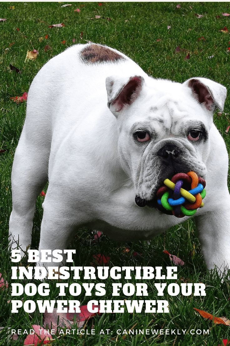 5 Best Indestructible Dog Toys For Aggressive Chewers 2019