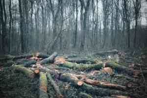 Short essay on Deforestation for children. 5 Major causes of Deforestation , Effects of it and Solution for Deforestation
