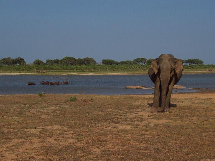 In tegenstelling tot andere Aziatische landen, hoef je in Sri Lanka geen keuzes te maken tussen de dingen die je wilt zien en doen. Het eiland is 1,6 keer groter dan Nederland en daarom erg compact en bereisbaar. Kennis maken met de goedlachse en vriendelijke bevolking, prachtige stranden, geschiedenis, cultuur, avontuur, dieren; de highlights zijnallemaal mogelijk met relatief weinig tijd. Pinnawela; Olifanten weeshuis In het westen van Sri Lanka vind je het olifanten weeshuis, in het…