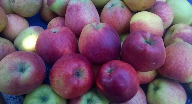 Na uskladnění jablek přes zimu je důležité myslet už při jejich sklízení.