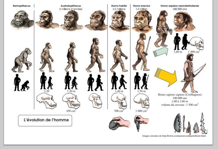 Ce lien est une frise imagée sur l'évolution de l'homme.  L'enseignant peut l'utiliser comme appui à l'étude des différentes populations préhistoriques.