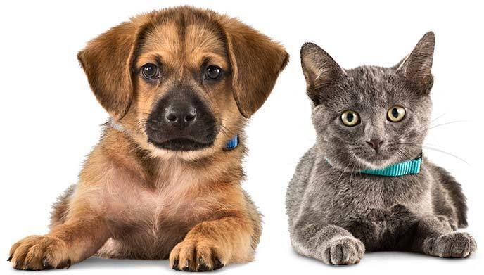 Pet Odors &8211; How to Elimenate them