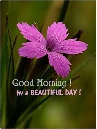 Image result for good morning saturday images with flowers