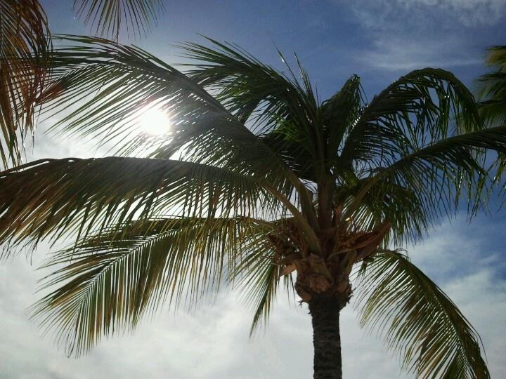 Aruba, Nikky beach ©Nicole Kokken