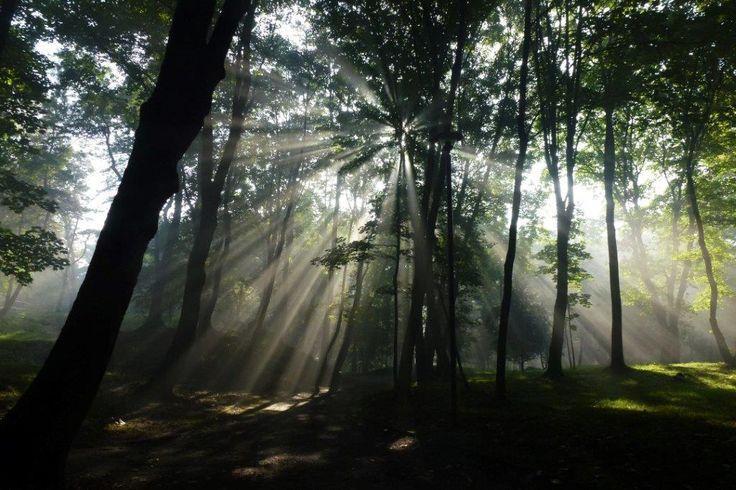 jak dobrze byłoby się tam teraz przenieść │ bytomski las │ fot. Anna Miklaszewska