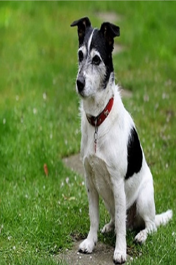 Tricks For Treats How To Teach Your Dog To Sit Dog Training