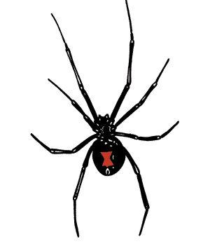 Black Widow Spiders...generally live in trash, closets, attics, woodpiles, ...   -  calpoison.com