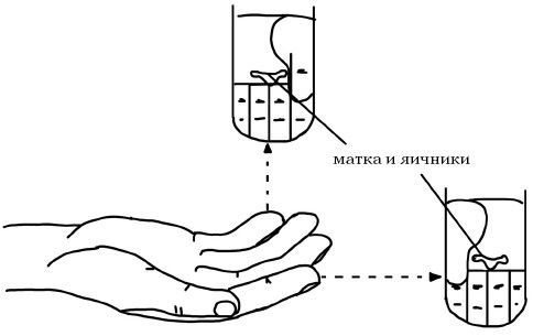 Точки соответствия матке и яичникам в мини-системе соответствия