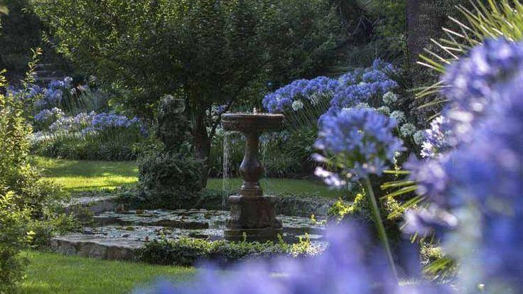 Près de la fontaine, les petites feuilles rondes du figuier nain rampant ( Ficus pumila) ont couvert les statues enfantines des putti.