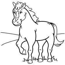 cavallo - Cerca con Google