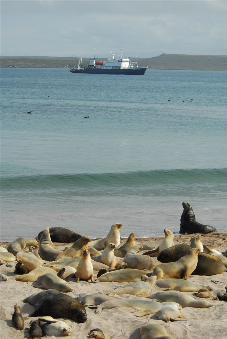 Seals enjoying the sunshine on the beach in the Sub-Antarctic ©ARuss