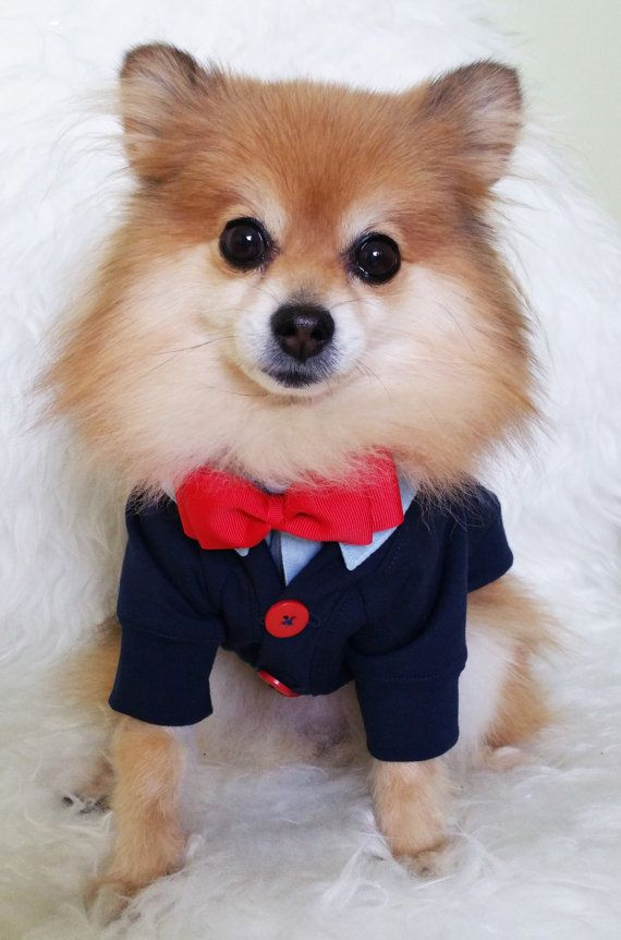 Check out this item in my Etsy shop https://www.etsy.com/ca/listing/246177593/dog-navy-cardigan-xs4xl-size-puppy