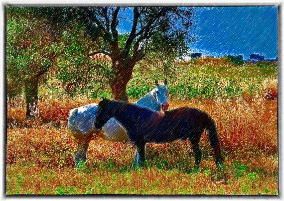 Two horses, Art  Photography,Digital Designs