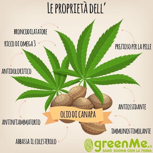 Olio di canapa: proprietà, usi, benefici e CONTROINDICAZIONI | greenMe.it | Bloglovin'