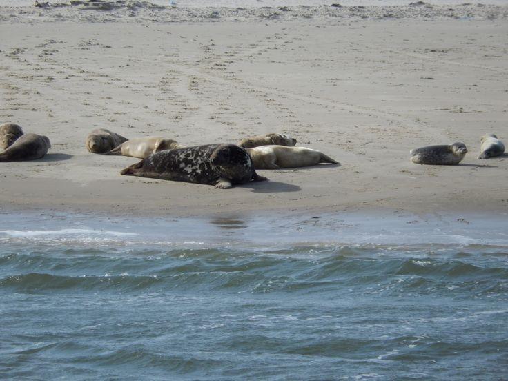 Een van onze nieuwste activiteiten voor 2014 op Terschelling wad kanoën naar de zeehondenbank