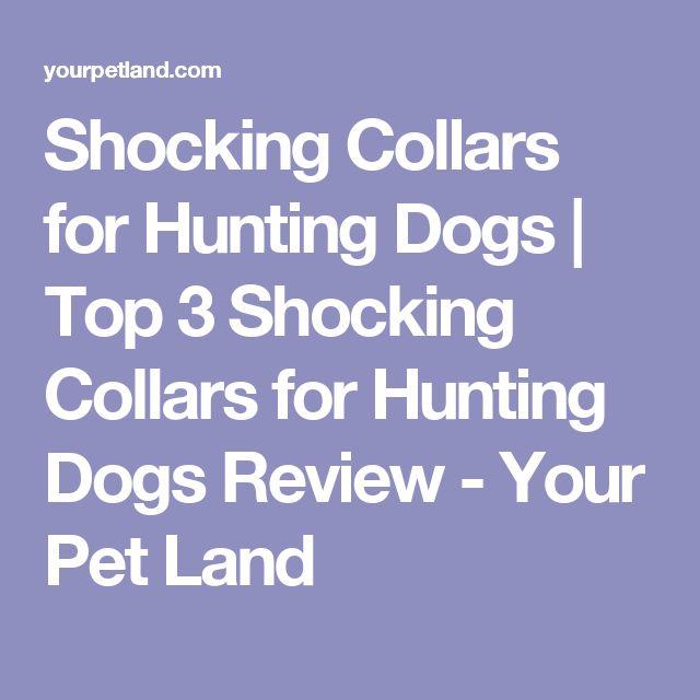 Shocking Collars for Hunting Dogs | Top 3 Shocking Collars for Hunting Dogs Review - Your Pet Land