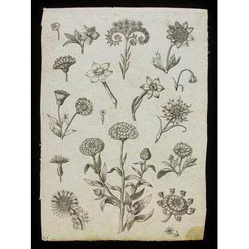 Adriaen Collaert, Florilegium