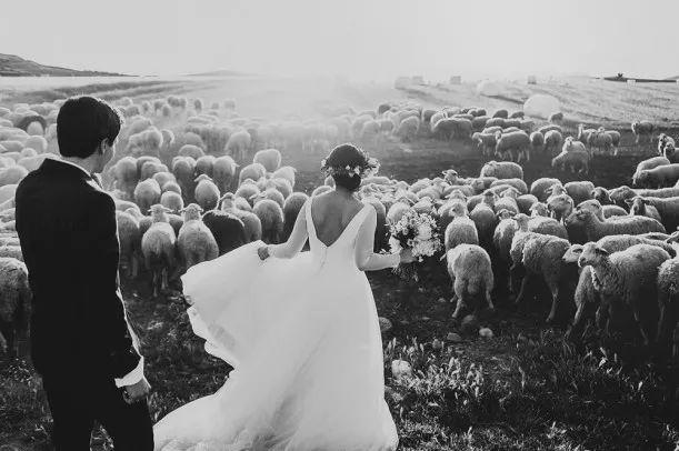 wedding shot | Blog | Čilichili