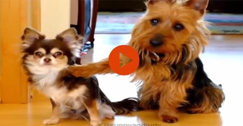 Funny Guilty Dogs #Funny#Cute#Dogs#Adorable#Animals
