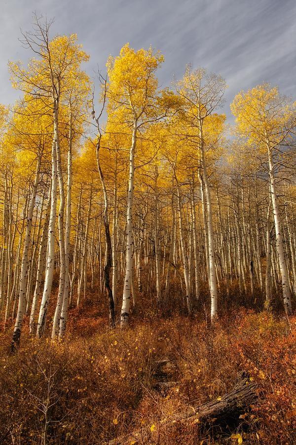 ✯ Streaked Skys Over Autumn Aspens