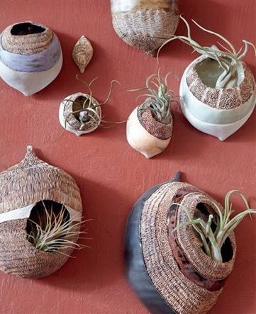 Tillandsia/Air Plant   I Love The Organic Look Of These Wall Pods