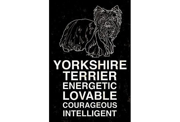 Yorkshire Terrier, Black