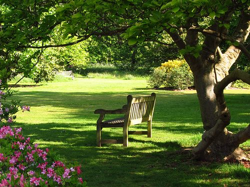 bench in Kew gardens: Gardens Seats, Azalea Gardens, Parks Benches, Front Yard, Kew Gardens, Good Books, Back Yard, Yard Ideas, Gardens Benches